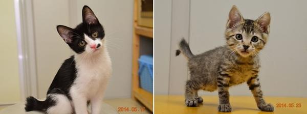 らひ子のプロフィール(飼い猫)