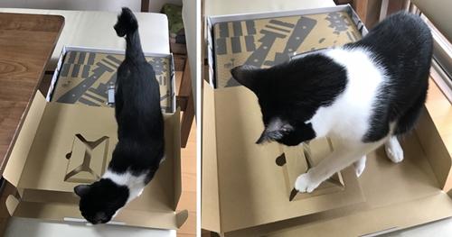 ニンテンドーラボで遊ぶ猫
