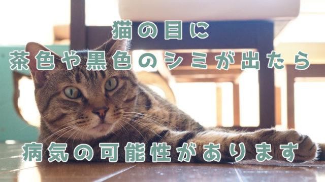猫の目に茶色や黒色のシミが出たら病院を受診しよう、病気の可能性あり