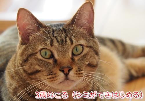 猫の目にある茶色や黒色のシミは病気の可能性あり(3歳)