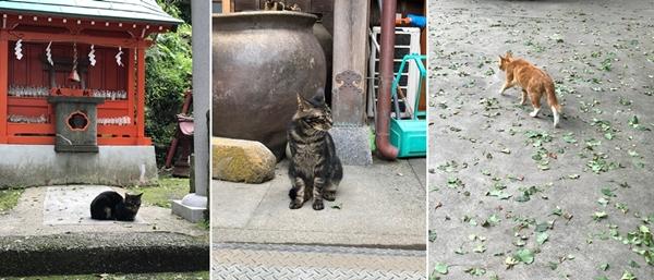 海南神社の猫