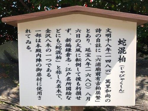 瀬戸神社の蛇混柏(じゃびゃくしん)の説明
