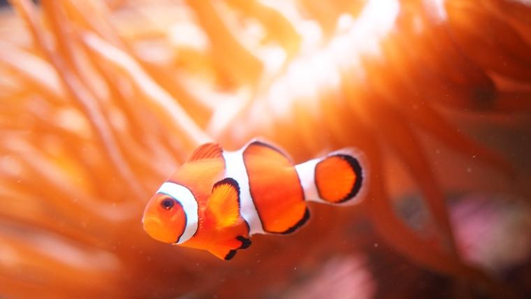 水族館で魚を撮影する