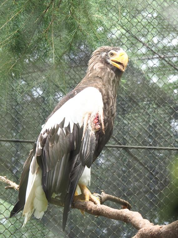 動物園で檻の中にいる動物を撮る