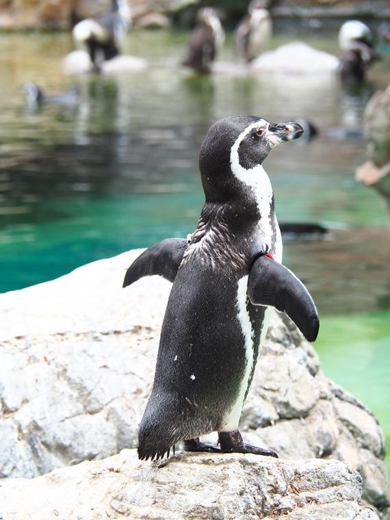 動物園で動き回る動物を撮影する