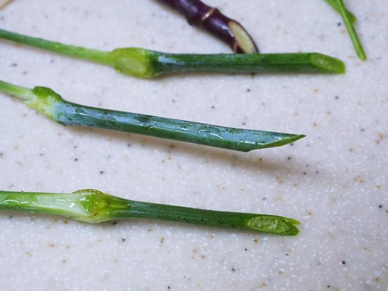 花の茎を斜めに花ハサミで切る